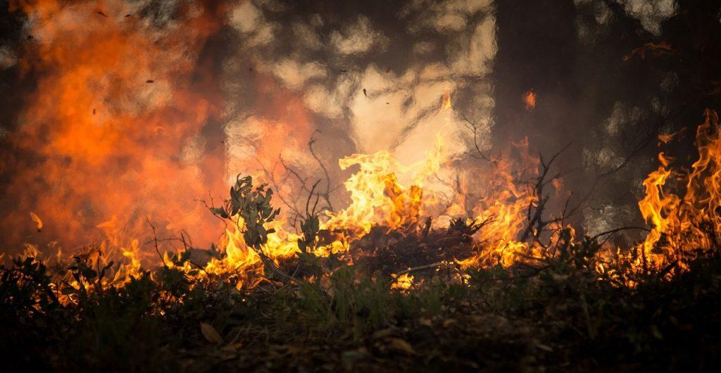 Feu de forêt - Un gel anti-incendie